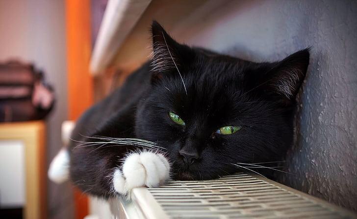 black cat laying on shelf