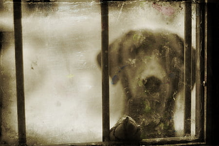 black dog outside glass window