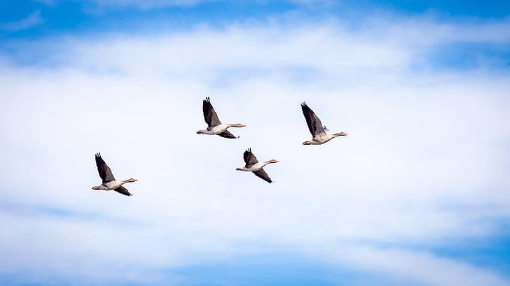 four birds flying