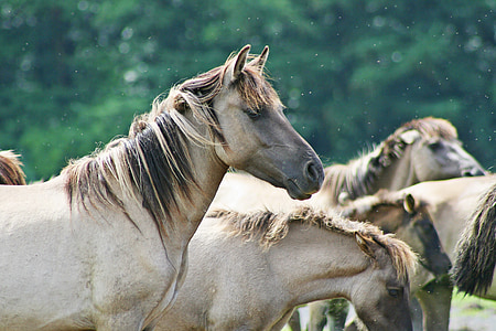 photography of brown horse