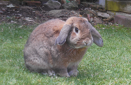 brown hare on green lawn