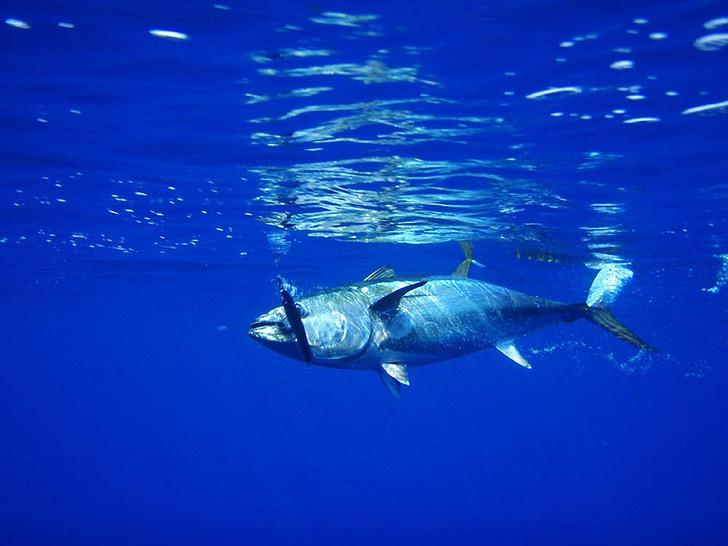 gray fish under the sea