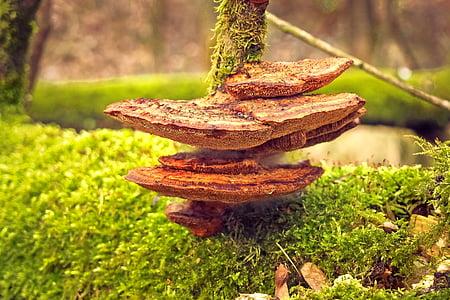 photo of brown mushroom