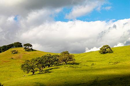 landscape photo of trees under nimbus clouds
