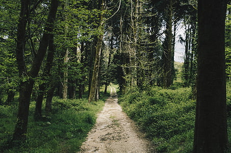photo of gray soil pathway surrounded by green trees