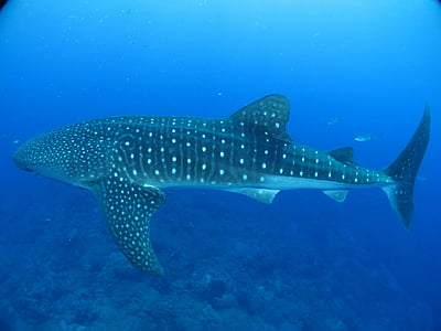 close up photo of whale shark