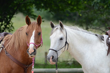 selective focus photography of two white and brown horses