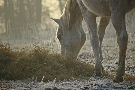 horse eating grass near green trees