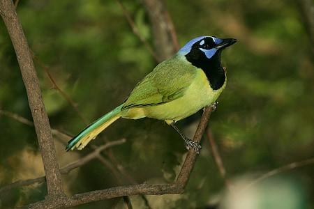 bird on tree stem