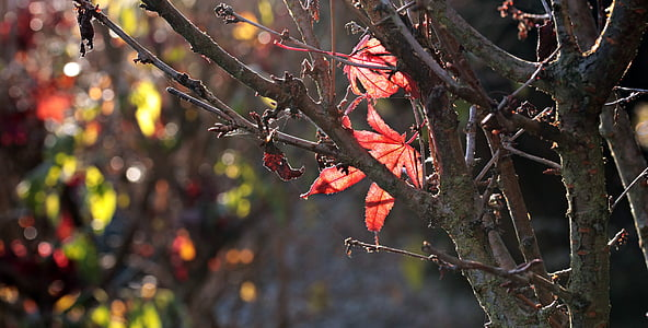 gray tree branch with red leaves