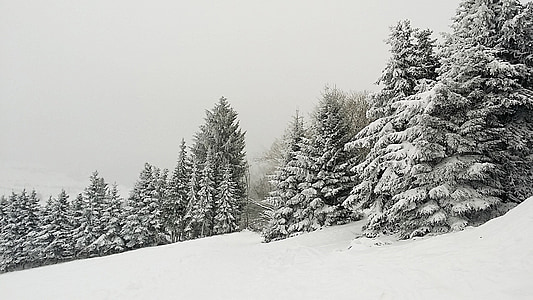 landscape photography of pine trees covered with snow