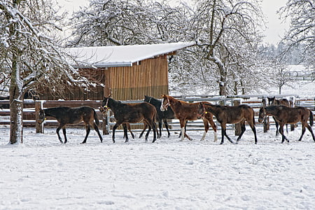 herd of horse near wooden fence