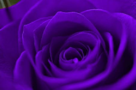 close-up photography of purple flower