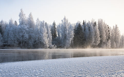 forest beside body of water