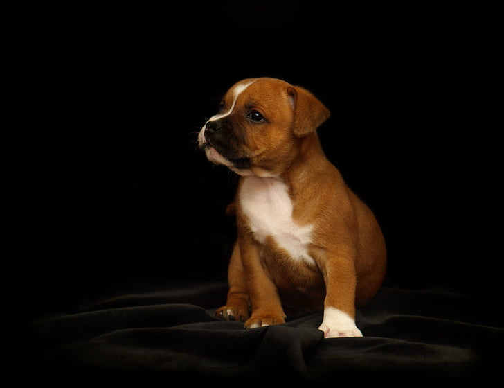 brown and white puppy sitting on black textile