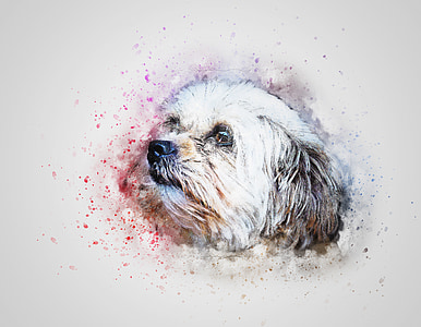 white and brown shih tzu painting