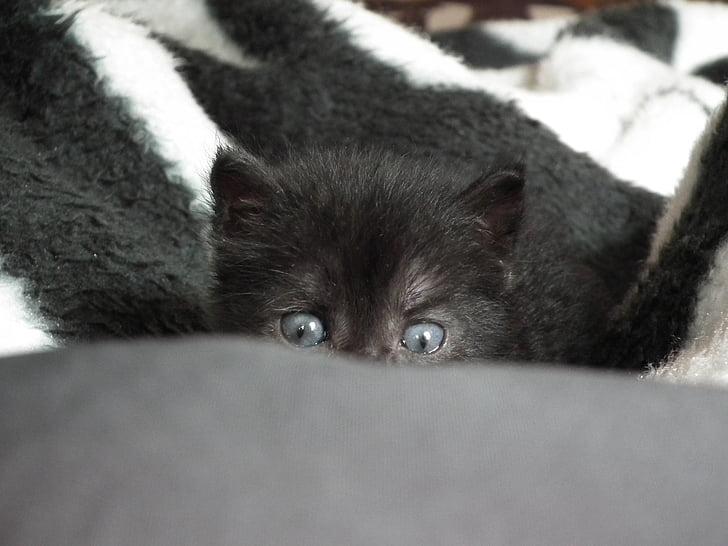 long-coated black kitten hiding