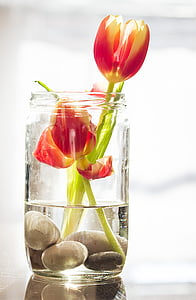 red petaled flowers in clear glass vase