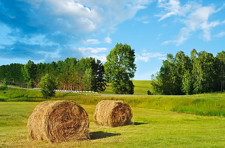 photo of brown hay near grass