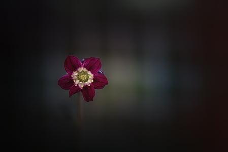 vignette photography of red petaled flower
