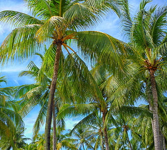 green coconut trees under clear blue sky
