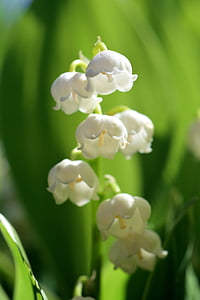 macro photo of white flowers