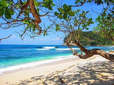 trees on seashore