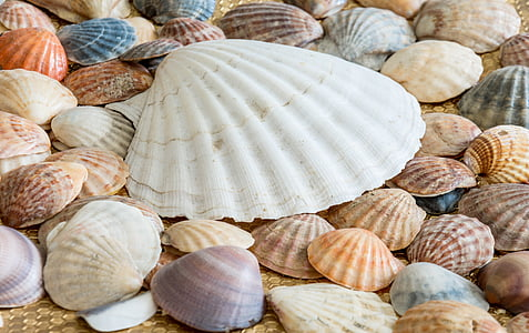 assorted-color seashell lot