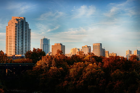 photography of brown leafed trees with a scene of high rise buildings