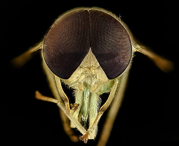 macro photography of brown fly