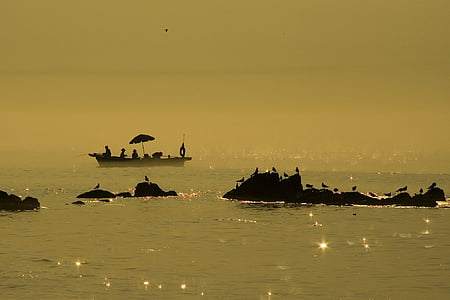 silhouette photo of birds on rock formation and boat