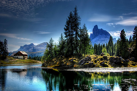 body of water with pine trees