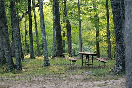 brown wooden picnic table beside black trees
