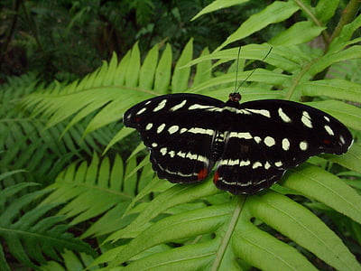 black and white butterfly perched on green fern plant