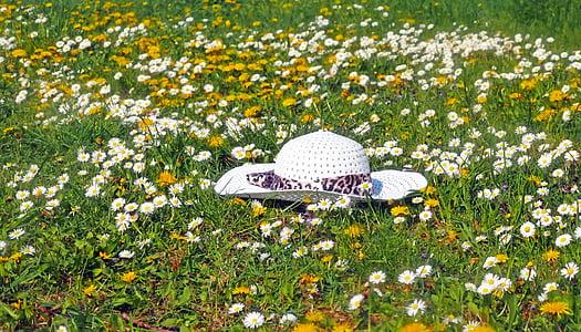 white sun hat on fields of white flower
