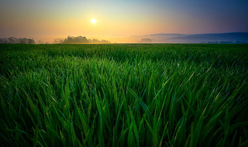patch of grass during sunrise