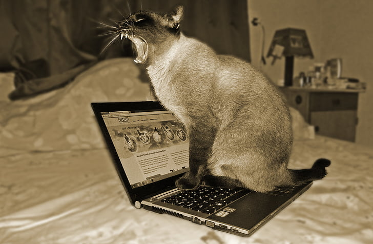 photography of cat on turned on laptop computer