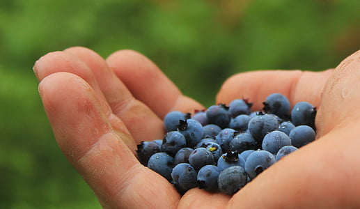 person with blueberries on his palm