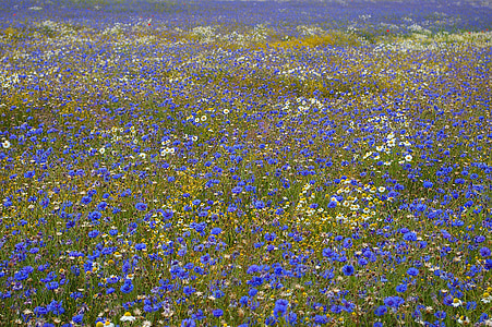 blue and white flower field at daytime