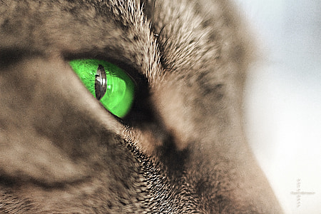 shallow focus photography of green animal eye