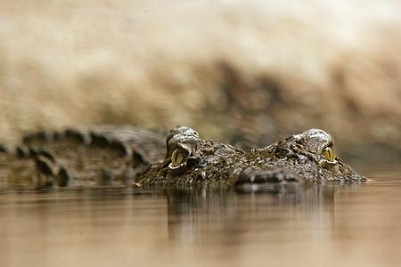selective photography of crocodile