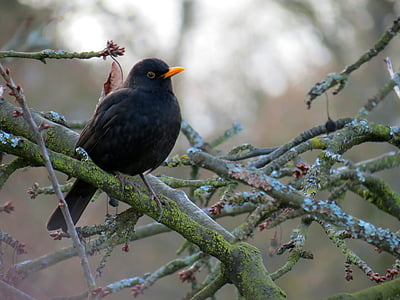 black bird resting on tree branches