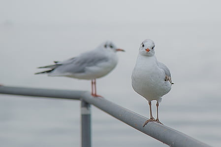 shallow focus of white and gray seagulls during daytime