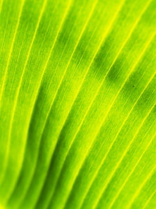 background, banana leaves, drop, element, environment, environmental
