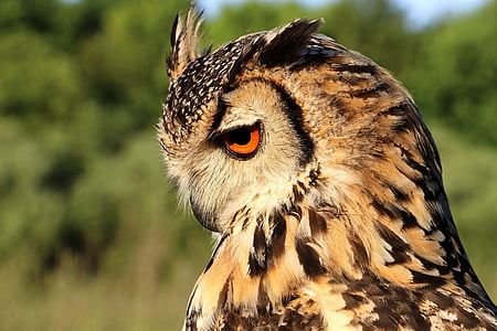 brown and black owl facing downward closeup photo