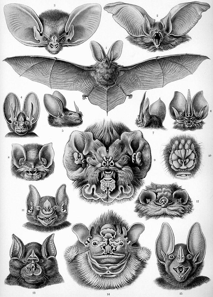 15 bat sketch