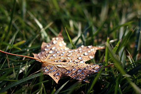 withered leaf on green grass