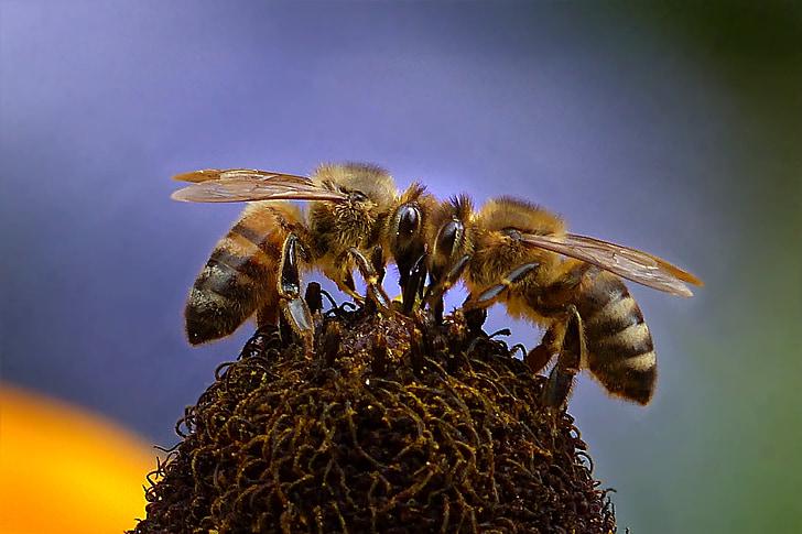 macro photo of honey bees