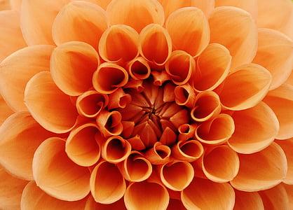 orange flower art
