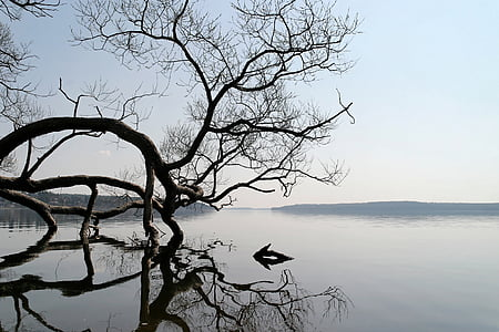 bare tree bending above body of water